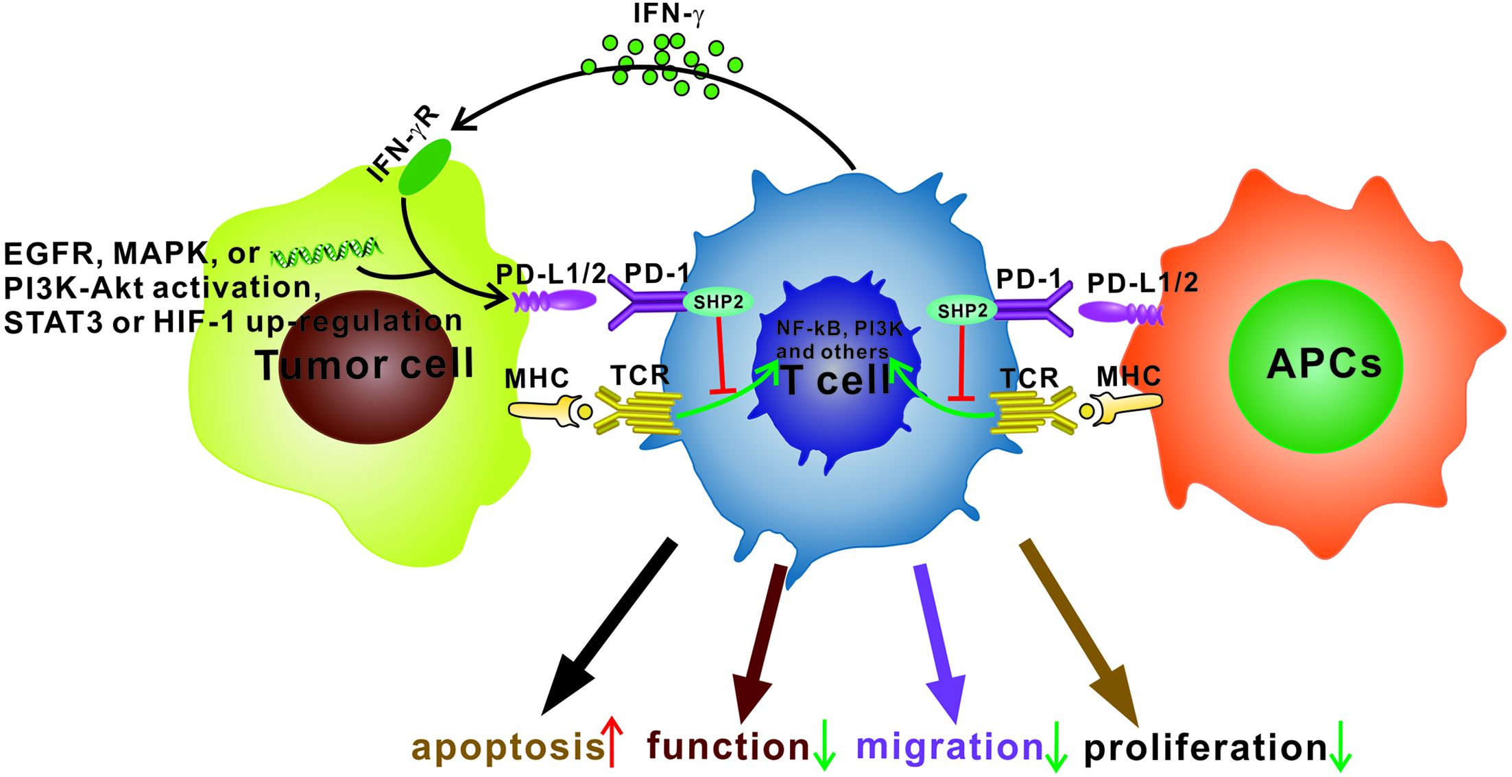 Future of anti-PD-1/PD-L1 applications: Combinations with